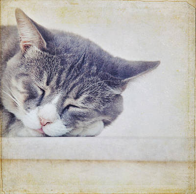 Y120831 Photograph - Mind Of Cat by Silvia Otten-Nattkamp Photography