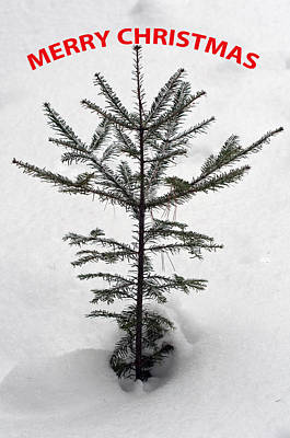 Photograph - Mini Christmas Tree 2 by Glenn Gordon