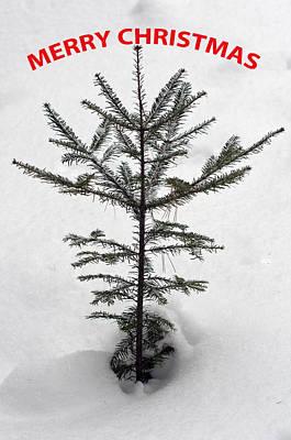 Photograph - Mini Christmas Tree 2 by Glenn Gordon