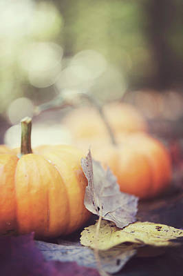Mini Pumpkins With Leaves Art Print by Samantha Wesselhoft Photography