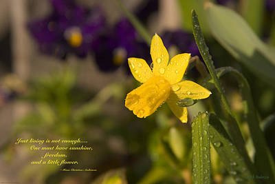 Miniature Daffodil After The Rain Art Print by Mick Anderson