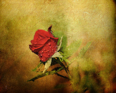 Of Roses And Love Wall Art - Photograph - Miniature Red Rose II by Jai Johnson