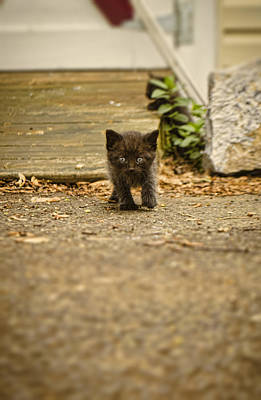 Photograph - Miniature Stalker by Heather Applegate