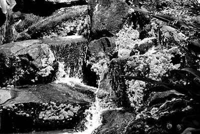Photograph - Minifall by Elizabeth  Doran