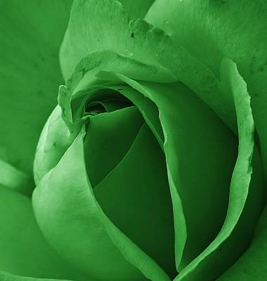 Photograph - Mint Delight by Bruce Bley