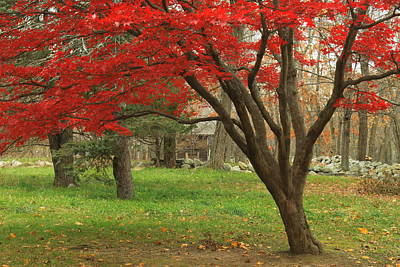 Concord Photograph - Minuteman National Historic Park Late Foliage by John Burk