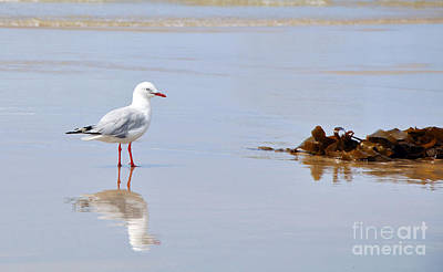 Mirrored Seagull Art Print by Kaye Menner