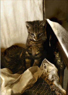 Photograph - Mischief Resting by Marilyn Marchant