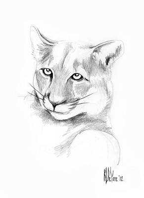Arcadia Valley Drawing - Missouri Mountain Lion  by Kip DeVore