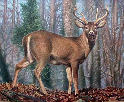 Missouri Whitetail Painting - Missouri Whitetail Deer by Hans Droog
