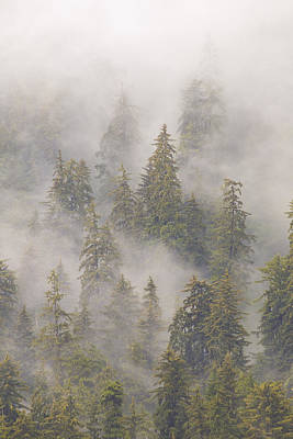 Mist In Tongass National Forest Art Print by Matthias Breiter