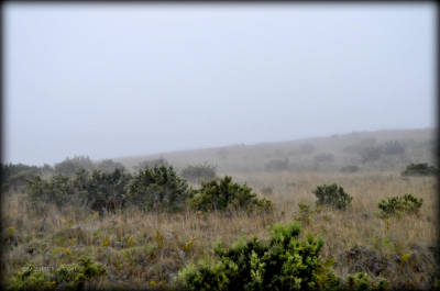 Photograph - Mists Between The Hills by Paulette B Wright