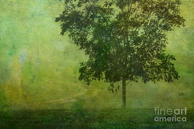 Photograph - Misty Country Lane by Judi Bagwell