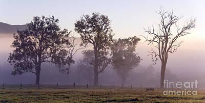 Silhouette Photograph - Misty Dawn by Carole Lloyd