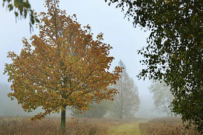 Misty Fall Original