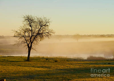 Photograph - Misty Morning by Diana Cox