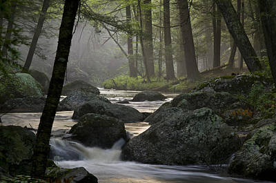 Misty Stream Art Print by Mark Archer