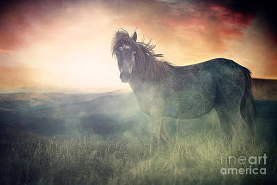 Misty Sunset Art Print by Lee-Anne Rafferty-Evans