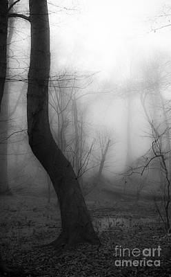 Pennypack Photograph - Misty Twist by Edward Spector