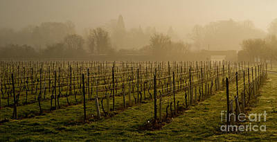 Misty Vines Art Print by Urban Shooters