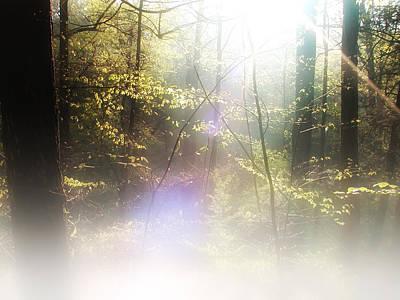 Beam Digital Art - Misty Woods by Bill Cannon
