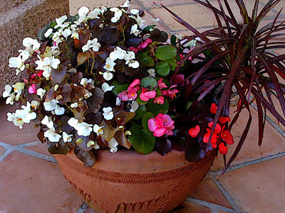 Begonia Garden Painting - Mixed Begonias And Dracena Plant In Terra Cotta Bowl by Elaine Plesser