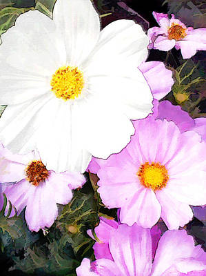 Cosmos Flowers Painting - Mixed Pink And White Cosmos by Elaine Plesser