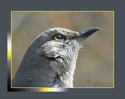 Photograph - Mockingbird Closeup by EricaMaxine  Price