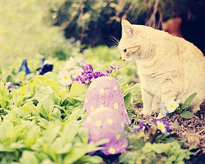 Ginger Cat Photograph - Moggytat by Linde Townsend