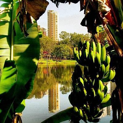 Banana Photograph - Moldura De Banana #lagoigapó #igapó by Gogliardo Maragno