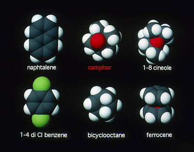 Molecules That Smell Like Camphor Art Print by David Parker
