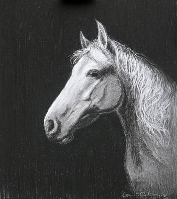 Equine Drawing Drawing - Mollie by Tomas OMaoldomhnaigh