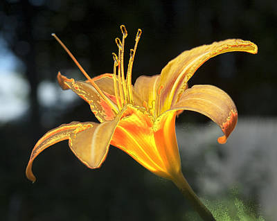 Photograph - Molten Lilly by Barry Doherty