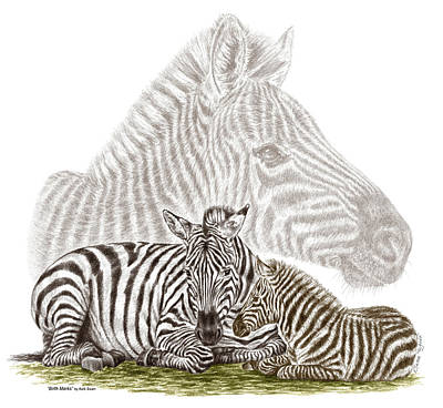 Drawing - Mom And Baby Zebra Art by Kelli Swan