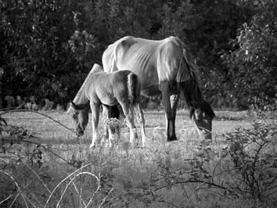 Mom And Foal Grazing At Sunset Art Print by Kim Galluzzo Wozniak
