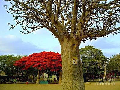 Moments And Tree Art Print by Fania Simon