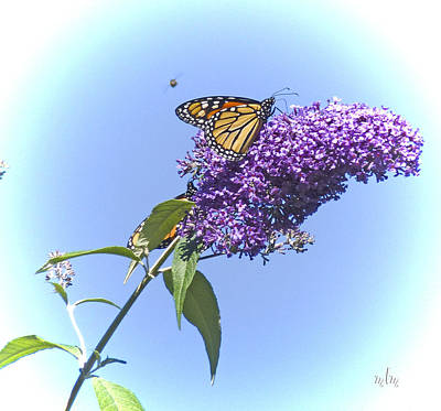Photograph - Monarch And Drone by Marie Morrisroe