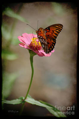 Photograph - Monarch Beauty by Donna Bentley