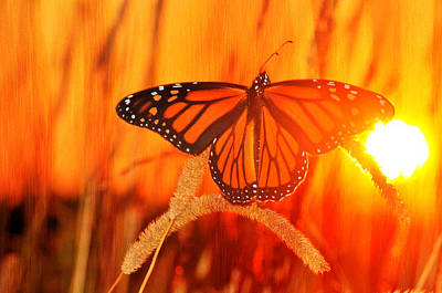 Photograph - Monarch Beauty by Emily Stauring