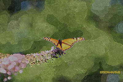 Butterflies Photograph - Monarch Butterfly by EricaMaxine  Price