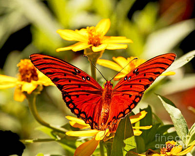Art Print featuring the photograph Monarch Butterfly  by Luana K Perez