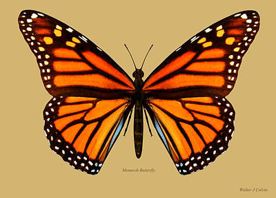 Digital Art - Monarch Butterfly by Walter Colvin