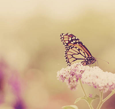 Yarrow Photograph - Monarch Butterfly With Bokeh by Kristy Campbell