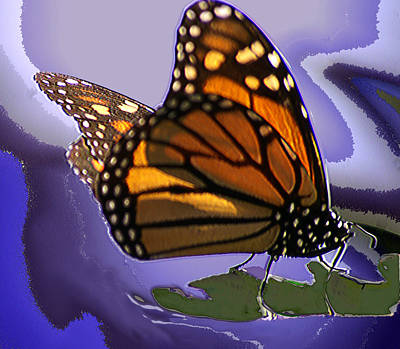 Photograph - Monarch Dreams by Gary Brandes