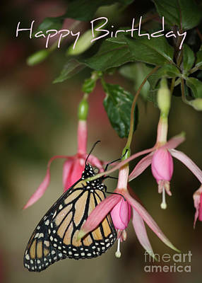Photograph - Monarch In The Fuchsias - Birthday Card by Carol Groenen
