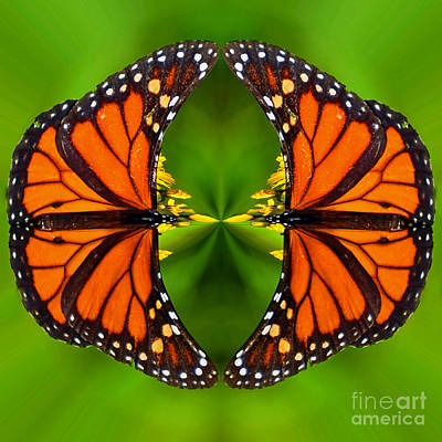 Photograph - Monarch Mirror  by Whispering Feather Gallery
