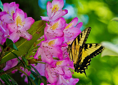 Photograph - Monarch Of Blowing Rock by Ches Black
