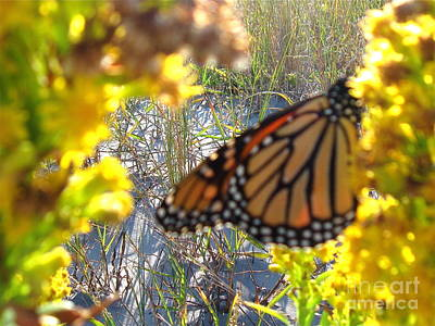 Photograph - Monarch On The Dunes  by Nancy Patterson