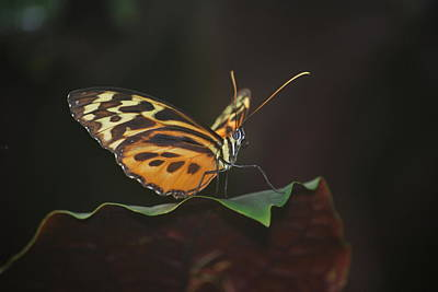 Photograph - Monarch Perch by Amee Cave