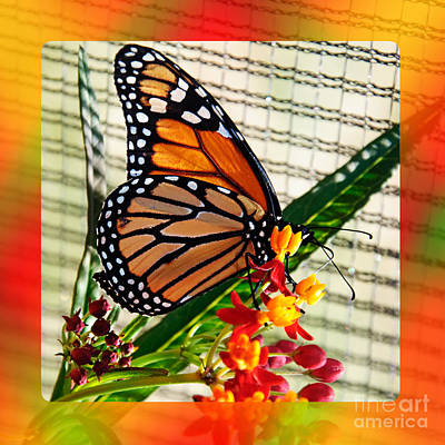 Photograph - Monarch Rainbow by Andee Design
